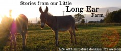long_ear_farm