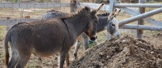 featured_curious_donkeys