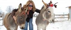 featured_xmas_donkeys