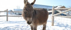featured_fuzzy_donkey