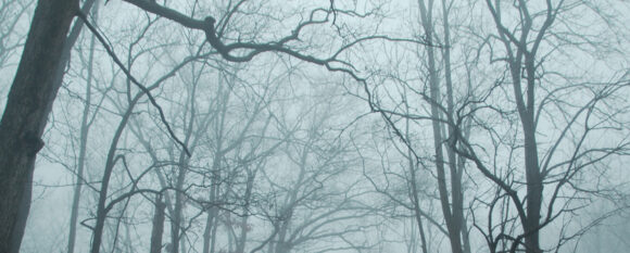featured_misty_branches