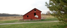 featured_future_donkey_barn