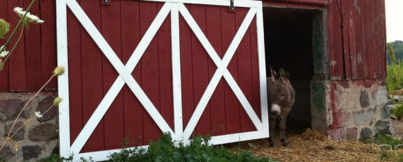 Featured New Barn Door