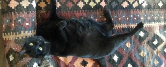 featured_cat_rug
